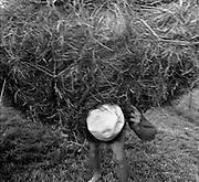 Faire les foins, heuen. Plasselb, August 1996. © Romano P. Riedo