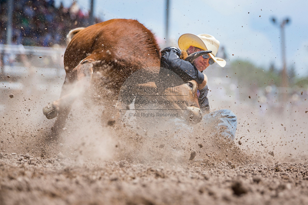 Steer wrestler Dakota Eldridge grabs his steer by the horns during the Steer Wrestling finals at the Cheyenne Frontier Days rodeo in Frontier Park Arena July 26, 2015 in Cheyenne, Wyoming. Eldridge went on to win second place.