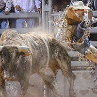 062114       Cable Hoover<br /> <br /> Bull rider Spud Jones in bucked off the in the final round of the Lions Club Rodeo Saturday at Red Rock Park.  No riders claimed the bull riding prize.