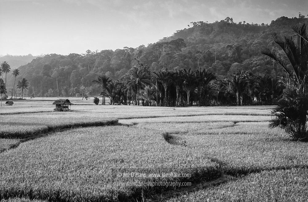 Krui, Lampung, Indonesia.