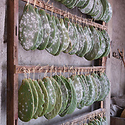 Cochineal insects on nopal cactus in the natural dyes studio of Porfirio Gutierrez and family in the Teotitlan del Valle, Oaxaca, Mexico on 1 December 2018. Cochineal is a parasitic insect native to Mexico which lives on the leaves of the prickly pear plant. When ready to harvest, the insects are gently dusted off and left to dry before being ground to crimson dust. In Teotitlan cochineal is still ground by hand on stone metates and used as a natural dye for yarn