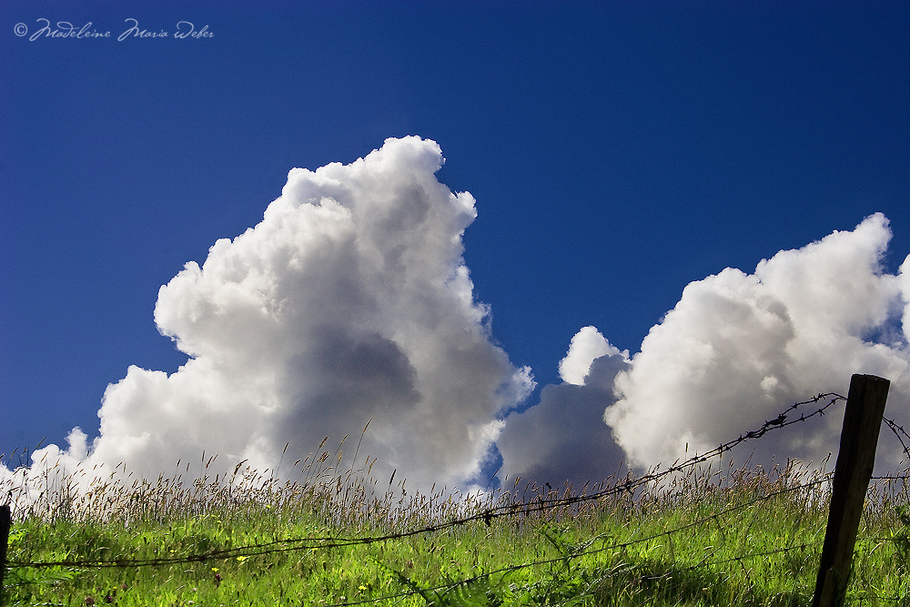 Puffy Clouds in sunny blue sky with green field and fence, Ireland / cl018