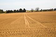 Sandy soil of ploughed field former Sandlings heathland Sutton, Suffolk, England, UK