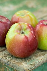 Apple - Malus 'Spartan'