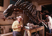 "Jose Bonaparte with Amargasaurus, a ""jibbed"" sauropod from the Argentina at the Museo de Ciencias Naturales de Buenos Aires.  Discoverer was Guillermo Rougier."