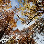 20161108 Fall Foliage tif