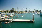 Paddle Boarding in the Oceanside Harbor