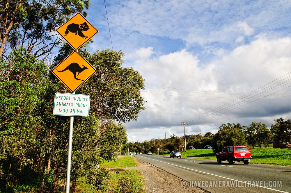 Warning sign on the side of the road warning of Koala and kangaroo crossing