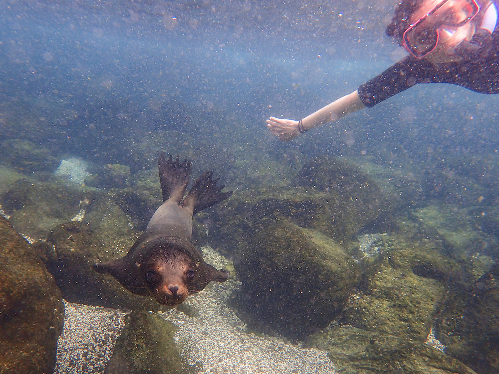 Visitor swimming with Sea Lion, Galapagos