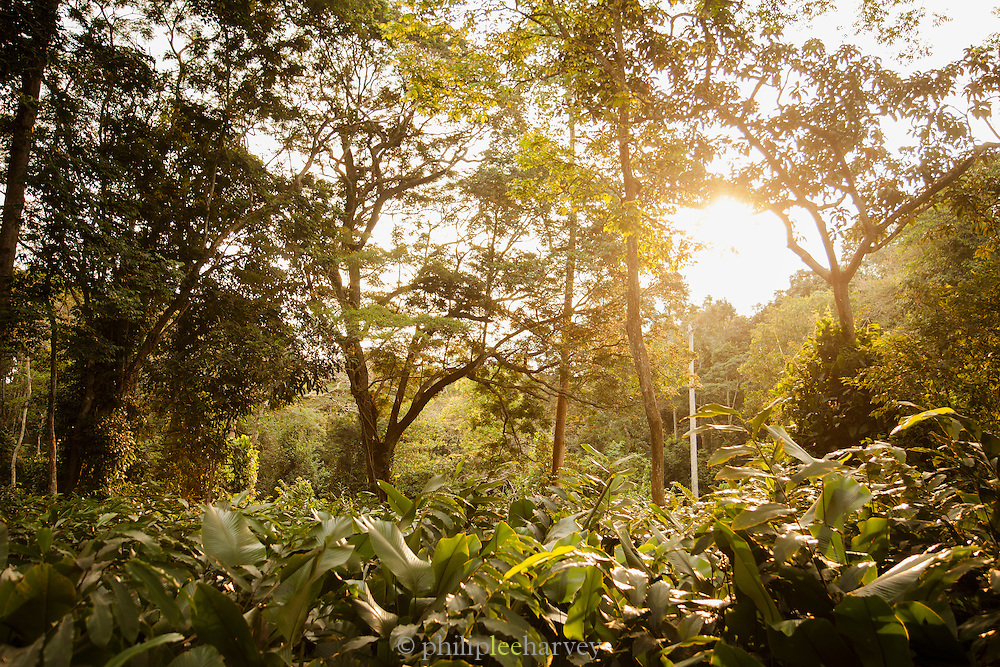Jungle undergrowth, Odzala-Kokoua National Park.