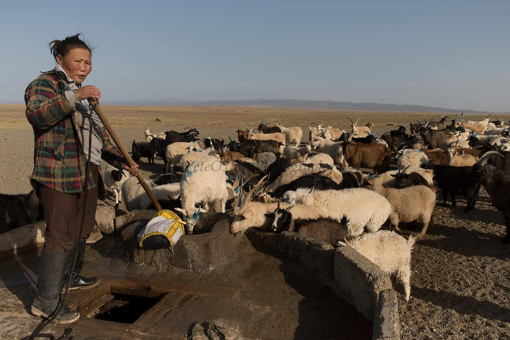 Herders at well<br /> Goats and sheep need watering nearly every day<br /> Gobi Desert<br /> Mongolia