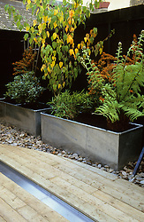 Decking with shallow steel rill. Metal planters including tree fern and pyracantha. Black painted fence. Design: Diarmuid Gavin