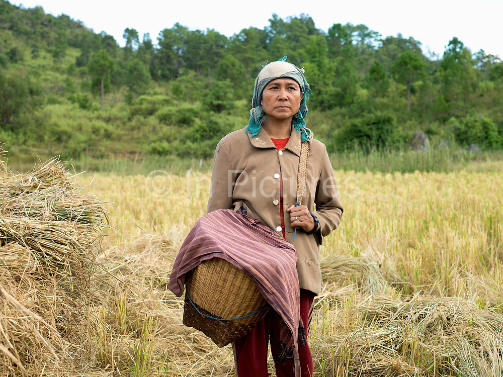 Grandmother takes care of a baby during a rice harvest in the ethnic Kayan village of Lo Pu, Kayah State, Myanmar on 16th November 2016. Kayan women traditional carry their babies in a bamboo basket until they are a year old