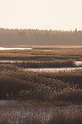 Frozen landscape of ice and reeds in lake Kaņieris, Kemeri National Park (Ķemeru Nacionālais parks), Latvia Ⓒ Davis Ulands | davisulands.com
