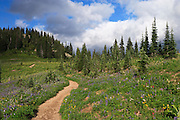 meadow along the Naches Peak Loop Trail below Naches Peak south of Chinook Pass along the Pacific Crest Trail in Mount Rainier National Park, Cascade Range, Washington state, USA