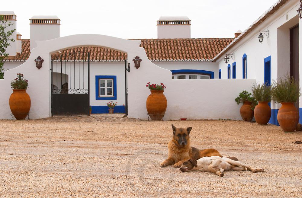 Dogs in the court yard. The old farm house in traditional Portuguese style. Herdade da Malhadinha Nova, Alentejo, Portugal