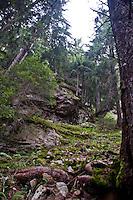 Golzern forest, Switzerland.