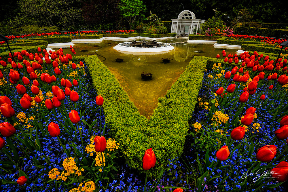 Butchart Gardens- Star Pond with tulips and forget-me-nots, Victoria, BC, Canada