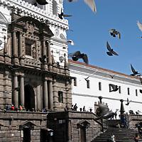 South America, Ecuador, Quito.  Pigeons grace the plaza of the impressive San Francisco Church in Quito's historical center, a UNESCO World Heritage site.