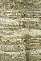 Common beech (Fagus sylvatica) bark detail with lichens, Basilicata/Calabria, Pollino National Park, Italy. November 2008. Mission: Pollino National Park