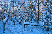 Winter in mixedwood forest<br />Birds Hill Provincial Park<br />Manitoba<br />Canada