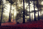 Misty forest on an October morning - photograph edited with texture overlays