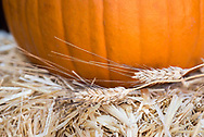 Pumpkin with dry grass and straw bale detail.
