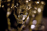 The Emmy at the 2009 International Emmy Awards Gala hosted by the International Academy of Television Arts & Sciences in New York.   ***EXCLUSIVE***