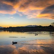 Dusk over la Raho lake, ducks swimming.