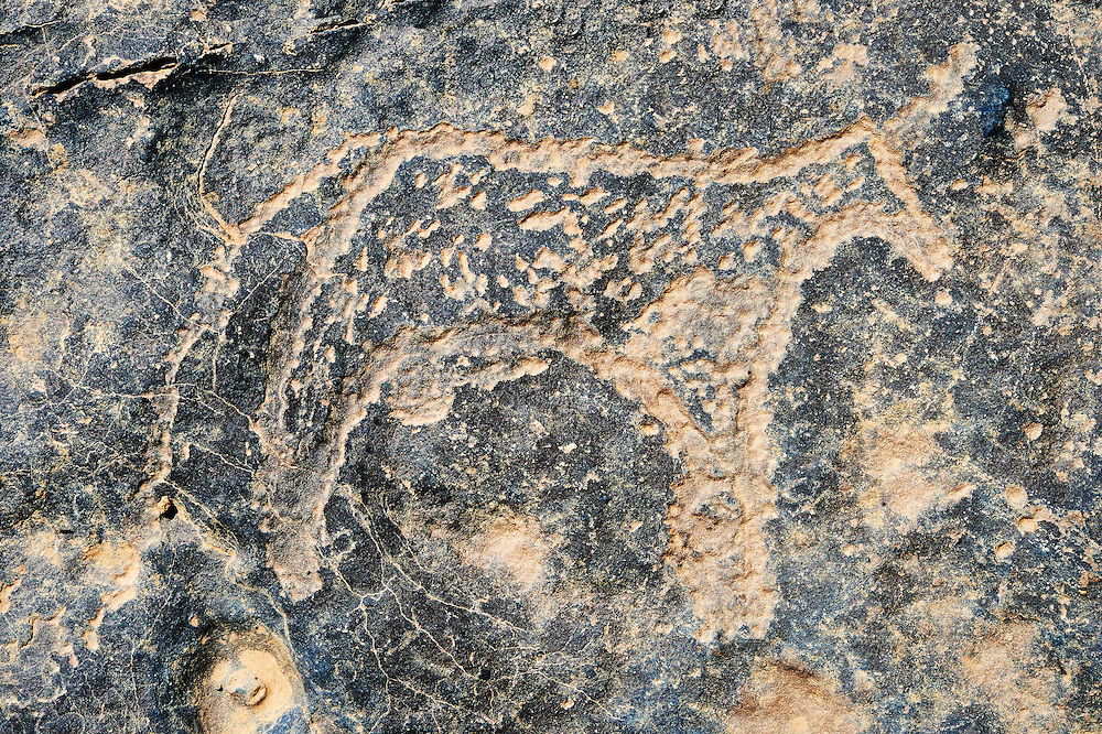 Prehistoric Saharan petroglyph rock art carvings of cattle from a site 20km east of Taouz, South Eastern Morocco .<br /> <br /> Visit our MOROCCO HISTORIC PLAXES PHOTO COLLECTIONS for more   photos  to download or buy as prints https://funkystock.photoshelter.com/gallery-collection/Morocco-Pictures-Photos-and-Images/C0000ds6t1_cvhPo<br /> <br /> Visit our PREHISTORIC PLACES PHOTO COLLECTIONS for more  photos to download or buy as prints https://funkystock.photoshelter.com/gallery-collection/Prehistoric-Neolithic-Sites-Art-Artefacts-Pictures-Photos/C0000tfxw63zrUT4