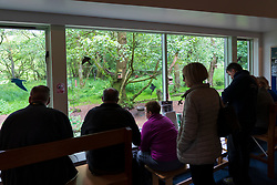 Visitors watching wildlife through observation window at Scottish Wildlife Trust visitor centre at Loch of the Lowes, near Dunkeld in Perthshire, Scotland, UK