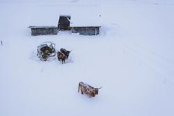 14.01.2021, Kaprun, AUT, starke Schneefälle im Westen Österreichs, im Bild Schottische Hochlandrinder auf einer mit Schnee bedeckten Weide // Scottish Highland Cattle in a pasture covered with snow in Kaprun, Austria on 2021/01/14. EXPA Pictures © 2021, PhotoCredit: EXPA/ JFK