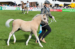 © Licensed to London News Pictures. 23/07/2019. Llanelwedd, Powys, UK. Welsh Mares & Foals Mountain Ponies - Section A event takes place in the main ring on the second day of the 100th Royal Welsh Agricultural Show. Founded in 1904, the Royal Welsh Agricultural Show is hailed as the largest and most prestigious event of its kind in Europe, with in excess of 200,000 visitors usually expected for the annual four day show period. Photo credit: Graham M. Lawrence/LNP