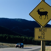A road sign near Big Sky, Montana warns of wildlife on the road.