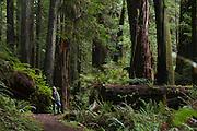 Prairie Creek Redwoods State Park, California, Redwoods National Park