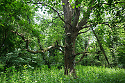 A view of woodland in Denham Country Park on 13th July 2020 in Denham, United Kingdom. Trees are currently being felled in Denham Country Park as part of works for the HS2 high-speed rail project, which is currently projected to cost around £106bn and will remain a net contributor to CO2 emissions during its projected 120-year lifetime.
