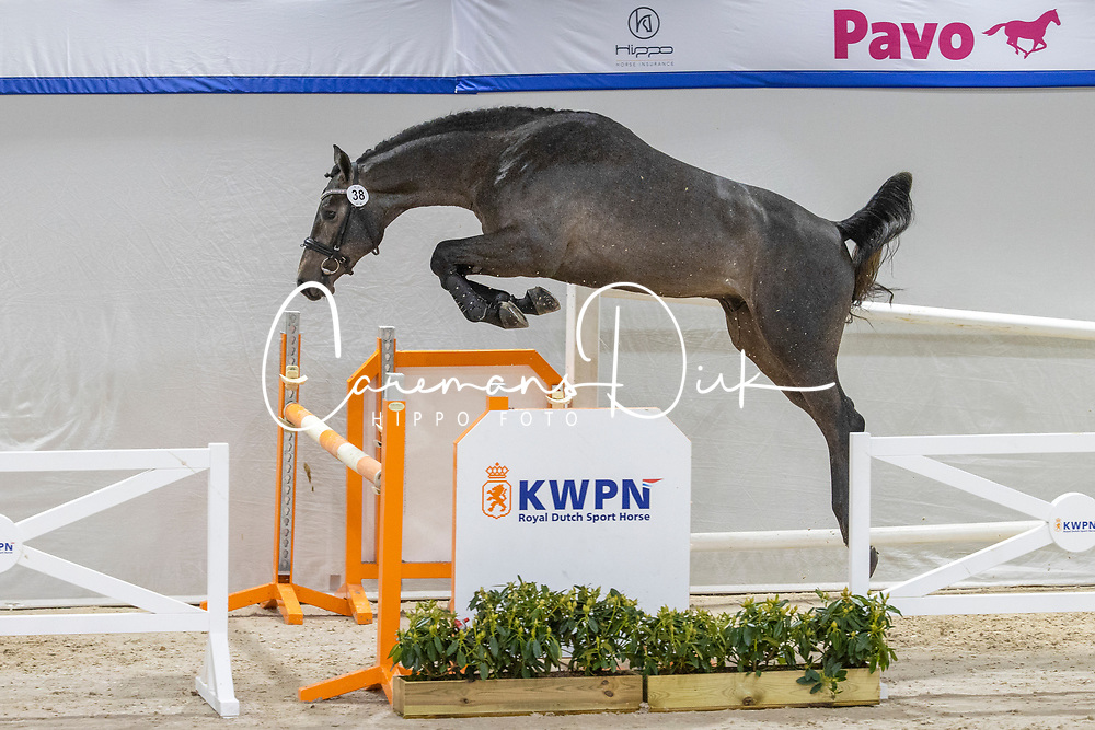 038, Namasté<br /> KWPN Hengstenkeuring 2021<br /> © Hippo Foto - Dirk Caremans<br />  03/02/2021