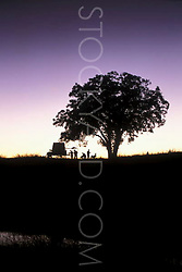 silhouette of people under a tree at a western campsite
