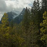 Fall colors brighten a forest below Mount Rundle in Alberta, Canada's Banff National Park.