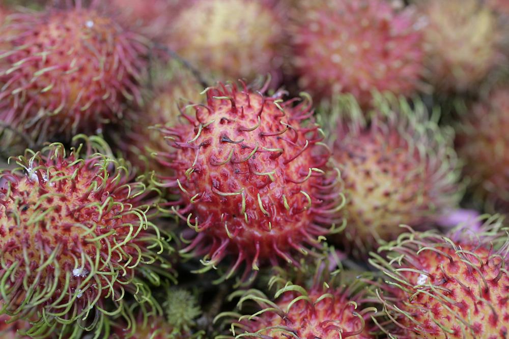 Rambutan tropical fruit, freshly gathered for market, Indonesia