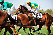 27 March 2010 : Bernie Dalton holds onto SUNSHINE NUMBERS early in the Carolina Cup GR. II hurdle race