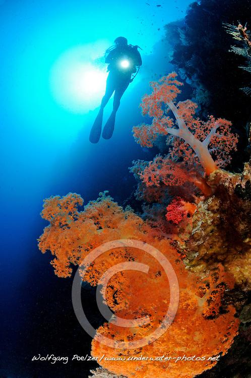 Dendronephthya sp.,Korallenriff, Weichkorallen und Taucher, Soft coral reef and scuba diver,Bali Barat Nationalpark, Insel Menjangan, Indonesien, Asien, Island Menjangan, Indopazifik, Indonesia, Indo-Pacific Ocean, Asia