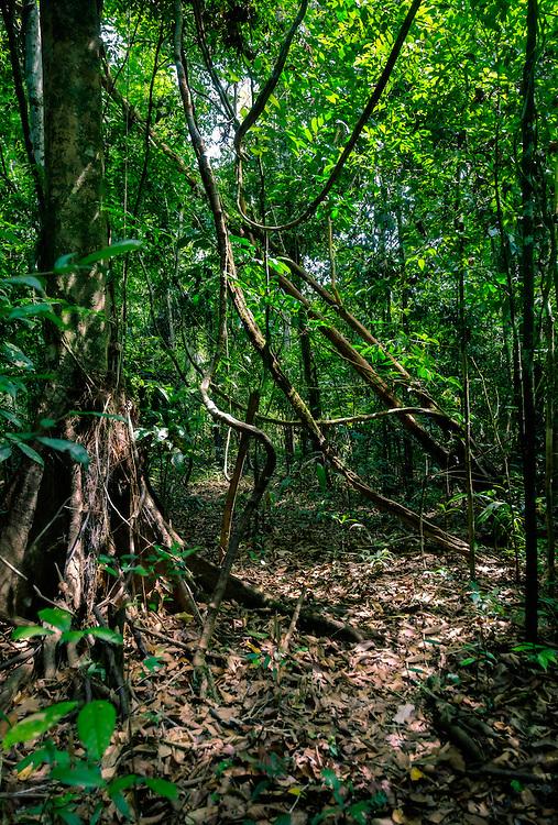 LORETO, PERU - CIRCA OCTOBER 2015:  Peruvian forest in the Amazon