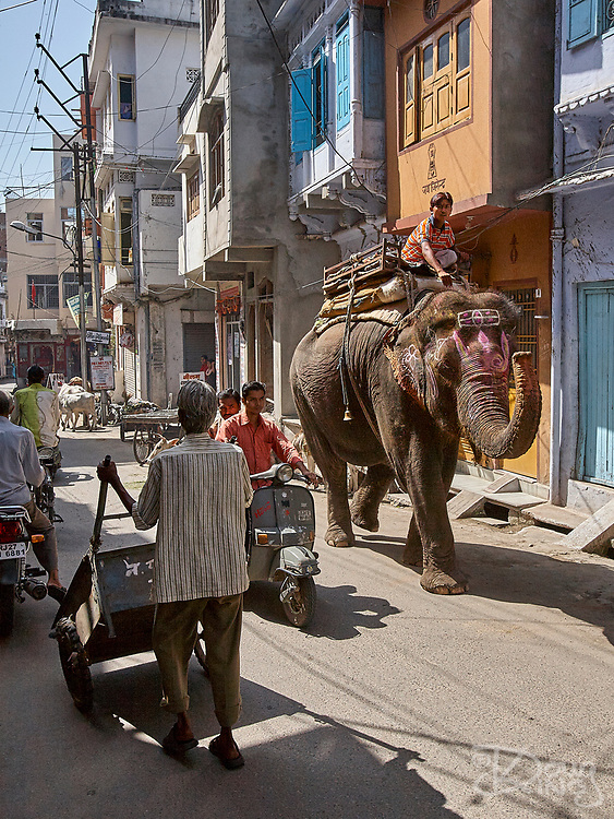 Elephants are a regular part of daily traffic on the streets of Udaipur in the Rajasthan region of India