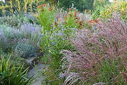 Autumn border at Marchants including Miscanthus sinensis 'Ferne Osten', Salvia uliginosa, and Helenium Helenium 'Dunkelpracht' seedling