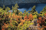 Trees on the shore of Foggy Lake, Mount Baker-Snoqualmie National Forest, Washington.