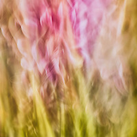 Macro Lens Painting of daisies.