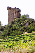 vineyard the ruin chateauneuf du pape rhone france