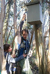Checking Leadbeater's Possum Nest Boxes