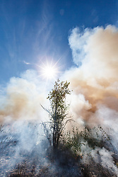 Sunburst through smoke and fire from prescribed burn on the Blackland Prairie at Clymer Meadow Preserve, Texas Nature Conservancy, Greenville, Texas, USA.